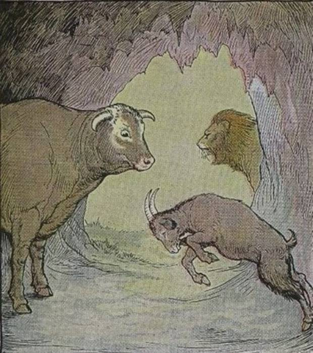 Aesop's Fables - The Bull And The Goat By Milo Winter