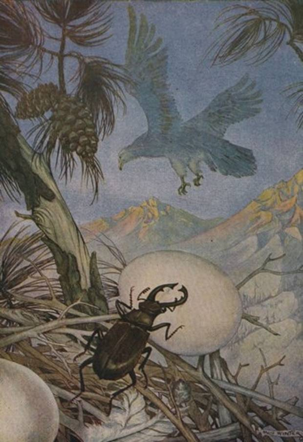 Aesop's Fables - The Eagle And The Beetle By Milo Winter