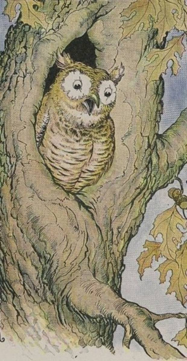 Aesop's Fables - The Owl From The Owl And The Grasshopper By Milo Winter