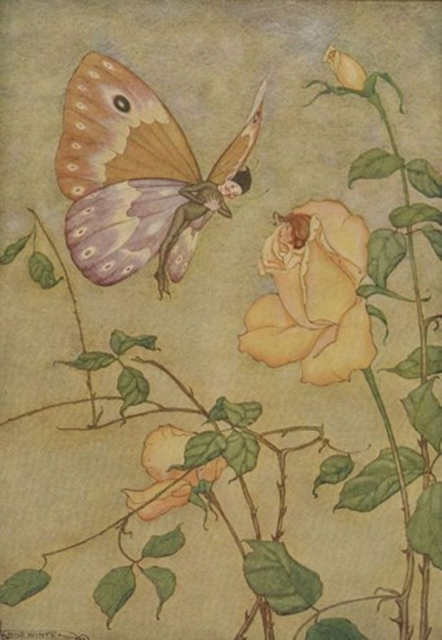 Aesop's Fables - The Rose And The Butterfly By Milo Winter