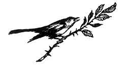 Folk Tale From Britanny - Decoration For Little White-Thorn And The Talking Bird