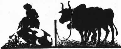 Illustration For The Ox Who Envied The Pig - A Jataka Tale