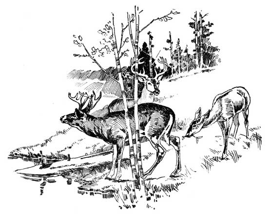 Legend Of The Iroquois - Decoration For The Greedy Fawn And The Porridge