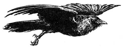 Legend Of The Iroquois - Why Crows Are Poor